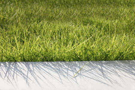 grass and white cement Stock Photo