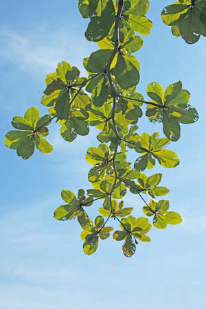 leaves on the blue sky background Stock Photo