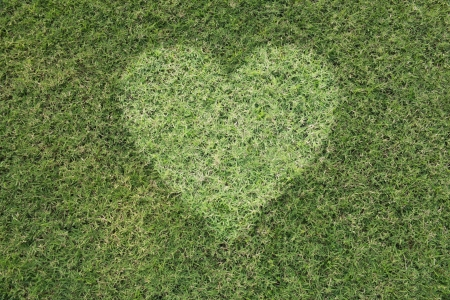 green heart on the green background