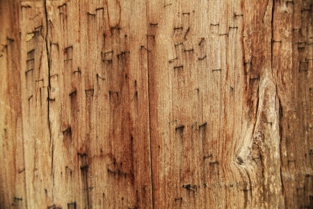 a pressed wood pieces together Stock Photo - 18172440