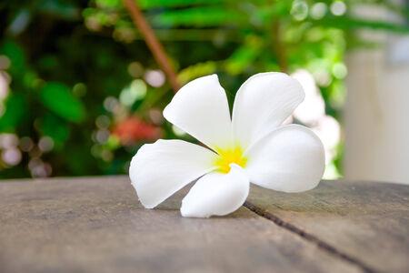 White plumeria on the wood