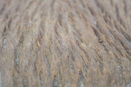 Wood texture with close up detail and blur