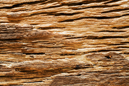 Wood texture with close up detail