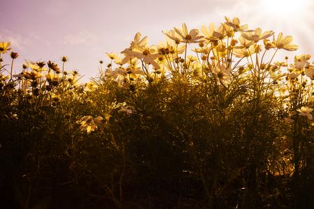 flowerbed: Beautiful flowerbed in garden
