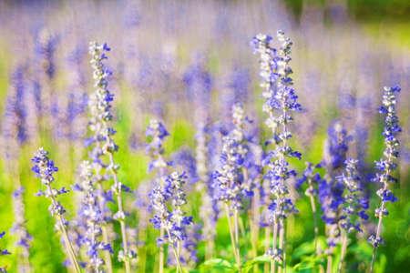 Beautiful flowerbed in garden