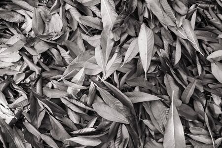Dead Leaf Gray Background Stock Photo