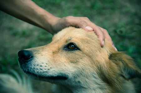 A hand is petting dog had,vintage color filtered.