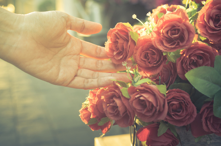 Female hand touching red rose,vintage filtered. Stock Photo - 52180649