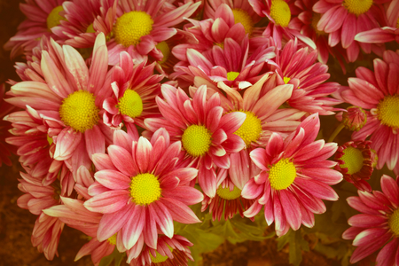 Vintage filtered color pink flowers. Stock Photo