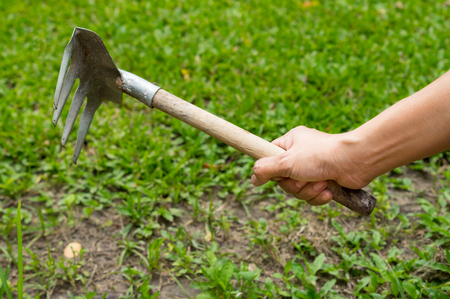 Woman using single hand garden rake. Stock Photo
