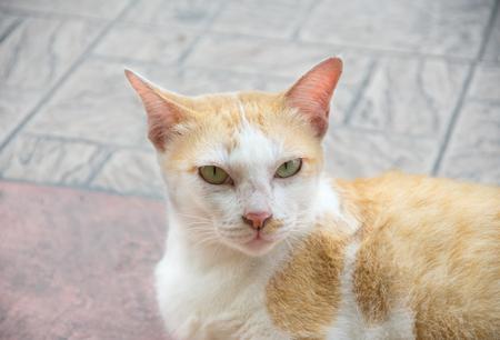 Homeless white cat on stone floor. Stock Photo