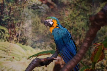 anima: colorful parrot Stock Photo