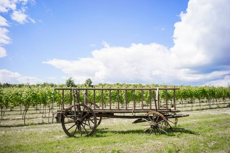 horse cart: Discarded horse cart with broken wheels in front of a vineyard Stock Photo