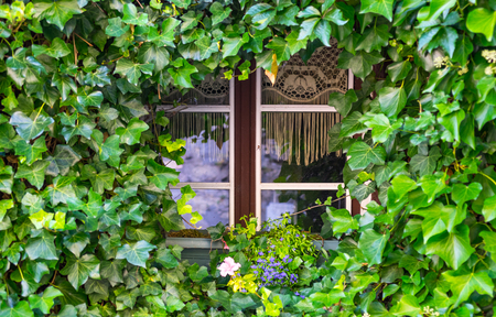 Picturesque windows and doors of ivy grown. Herrstein City Germany