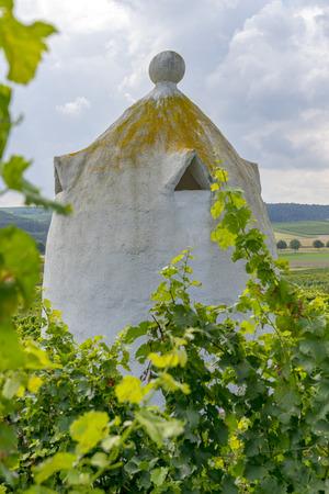 hessen: Vineyards in the harvest season in Rhein-Hessen in Rhineland-Palatinate, Germany