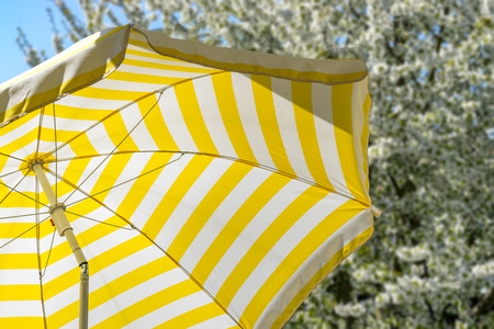 Yellow and white striped parasol in front of a full-flowered cherry tree in spring. Background. Wallpaper.