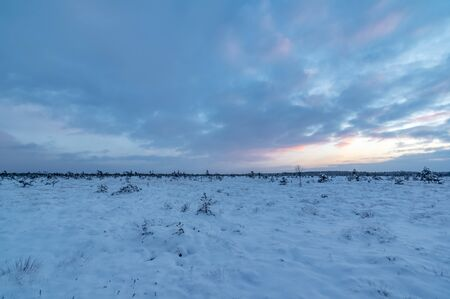 bog: Winter Peat or Bog Landscape at Sunset