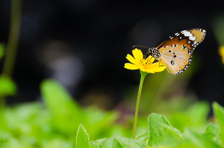 Parasitic butterfly pollination photo