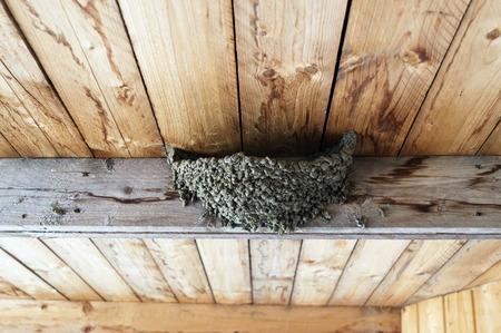 bird watcher: swallow nest