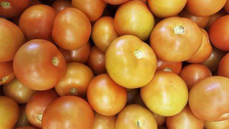 Natural tomatoes Natural tomatoes from the garden Banco de Imagens