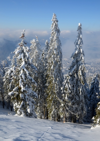 Trees covered with snow on a mountain Stock Photo