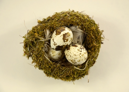 Motley quail eggs in nest standing on a beige background