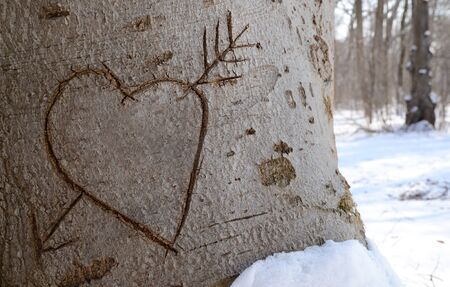 Carved heart in a pine tree in a winter forest with deep snow