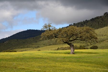 Lonely tree on a green field with yellow flowers in front of some hills Stock Photo