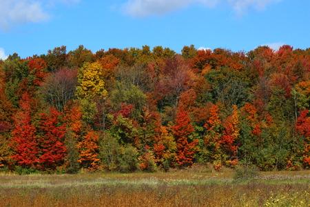 fall landscape: Fall Landscape
