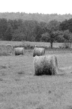 canada agriculture: Field with Hay Bales Stock Photo