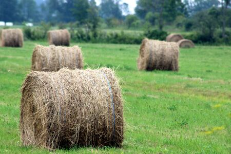 hay bales: Field with Hay Bales Stock Photo