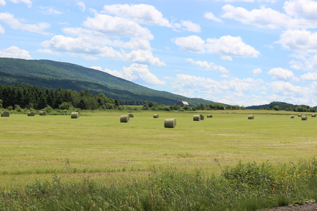 canada agriculture: Rural landscape with hay bales