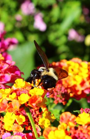 Wasp on Flowers Zdjęcie Seryjne