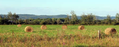 Field with Hay Bales in Eastern Ontario