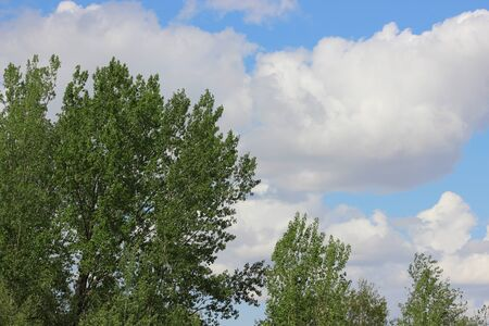 Tree and clouds in summer
