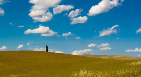 montalcino: The hills of Montalcino, a wine town, Siena, Tuscany, Italy