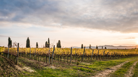 vestige: The beautiful countryside of Lucignano in Tuscany
