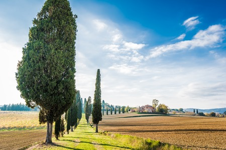 The plant and the vineyard in the beautiful countryside of Lucignano in Tuscany Banco de Imagens