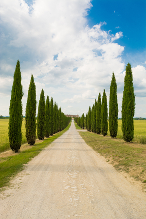 val dorcia: Avenue in Val dOrcia in Siena in Tuscany, Italy
