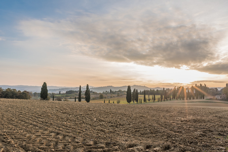 vestige: The plant and the vineyard in the beautiful countryside of Lucignano in Tuscany Stock Photo