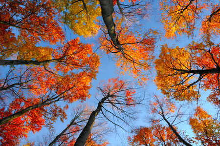 treetops: Autumn treetops Stock Photo