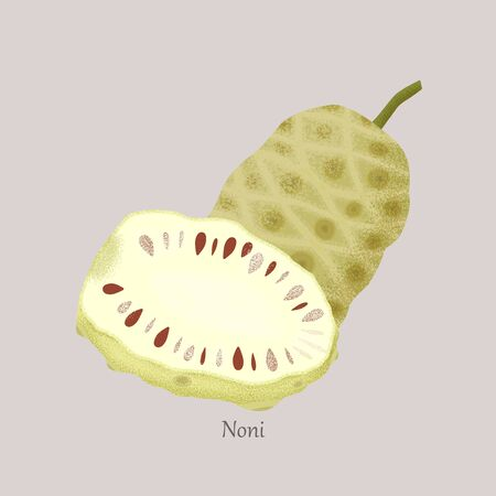 Noni or Indian Mulberry, whole and noni slice isolated on gray background.