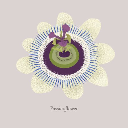 Passionflower is a grassy liana with a beautiful blossom.