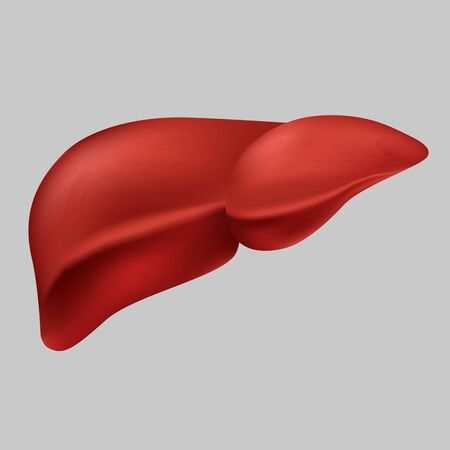 Human realistic liver vector graphic illustration medical organ icon isolated on white background. Flat style design anatomy internal organs symbol body healthcare element