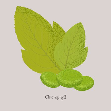 Chlorophyll is a green photosynthetic pigment in the leaves of plants.