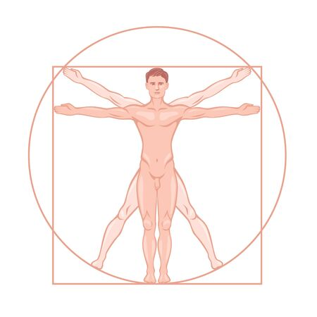 Leonardo da Vinci Vitruvian man proportion standard vector graphic illustration