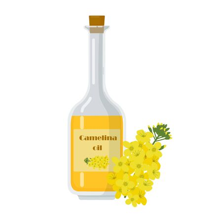 Bottle with camelina sativa oil. False flax liquid in glass container. Botanical flowering plant, german sesame, and siberian oilseed vector illustration.