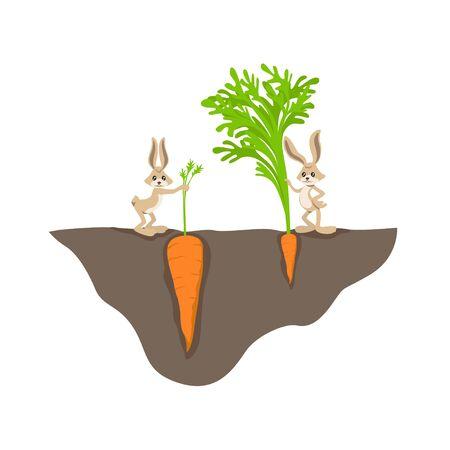Zwei lustige Cartoon-Kaninchen mit kleinen und großen Karotten auf Gartenbett-Vektorgrafik-Illustration