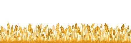 Cartoon yellow wheat field background isolated on white vector flat illustration