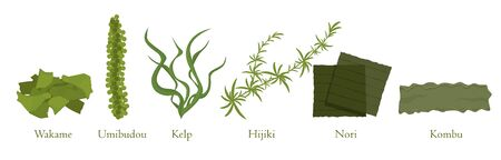 Cartoon seaweed set vector graphic illustration. Collection of natural algae marine plant